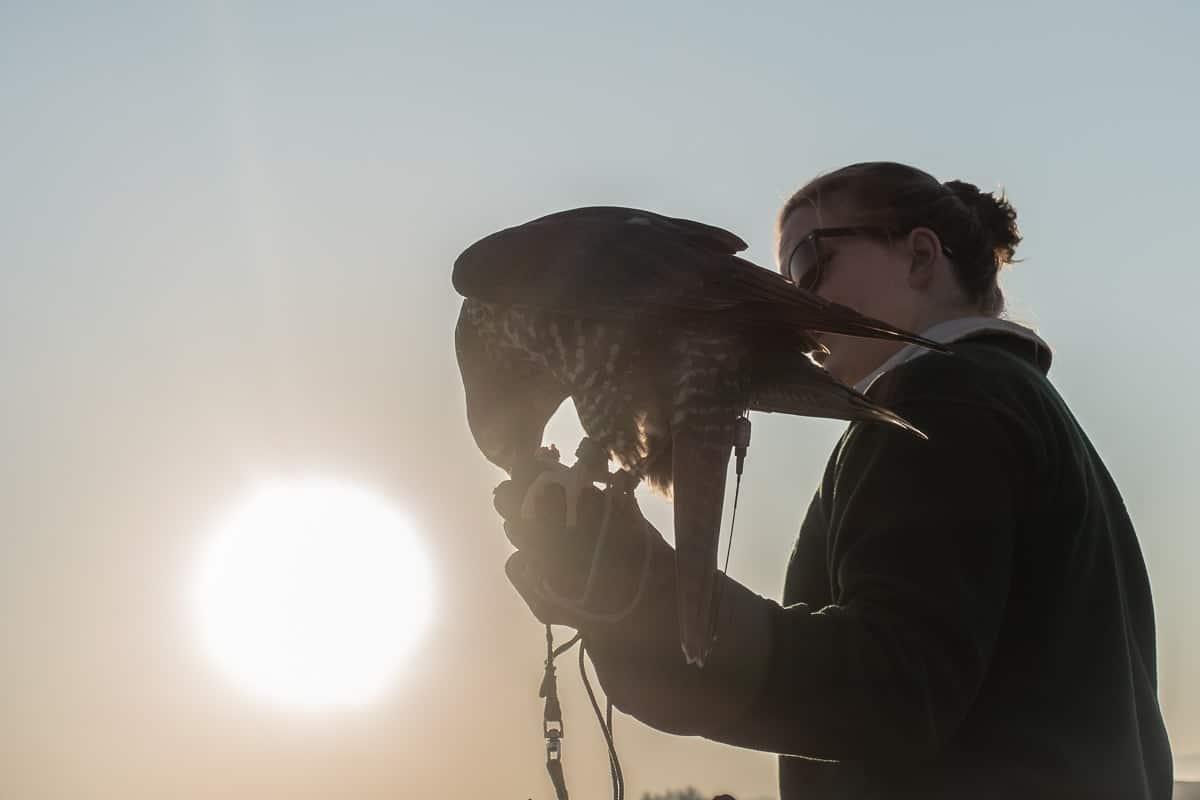 al-maha-activites-oiseaux-