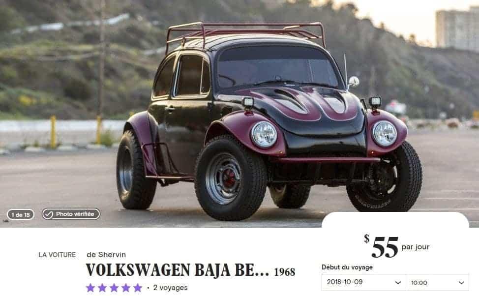turo beetle