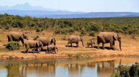 Se Loger Gratuitement En Afrique Du Sud Avec Les Points Marriott Bonvoy