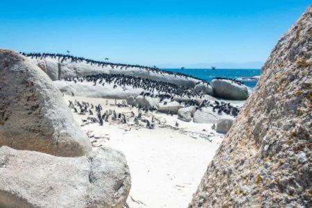 Semaine Mtm Pingouins